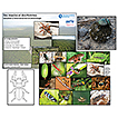 Using field-based entomological research ...