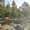 Rocky pine forests in the High Coast ...