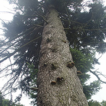 Polypores, Agrobacterium and ivy damage ...